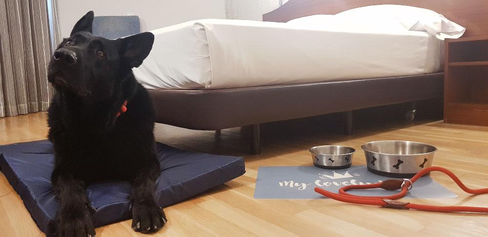 Hotel Ciudad de Burgos, alojamiento para perros en Burgos